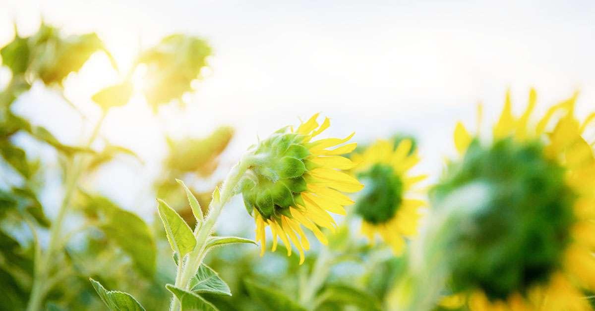 garden full sun