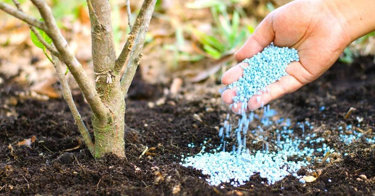 All About Fertilizer