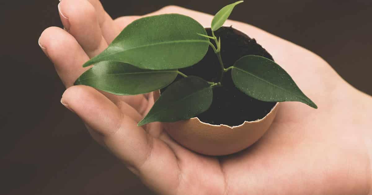 Energy Saving Tips for The Garden
