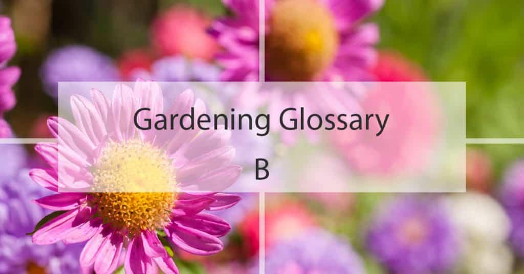 Gardening Glossary B