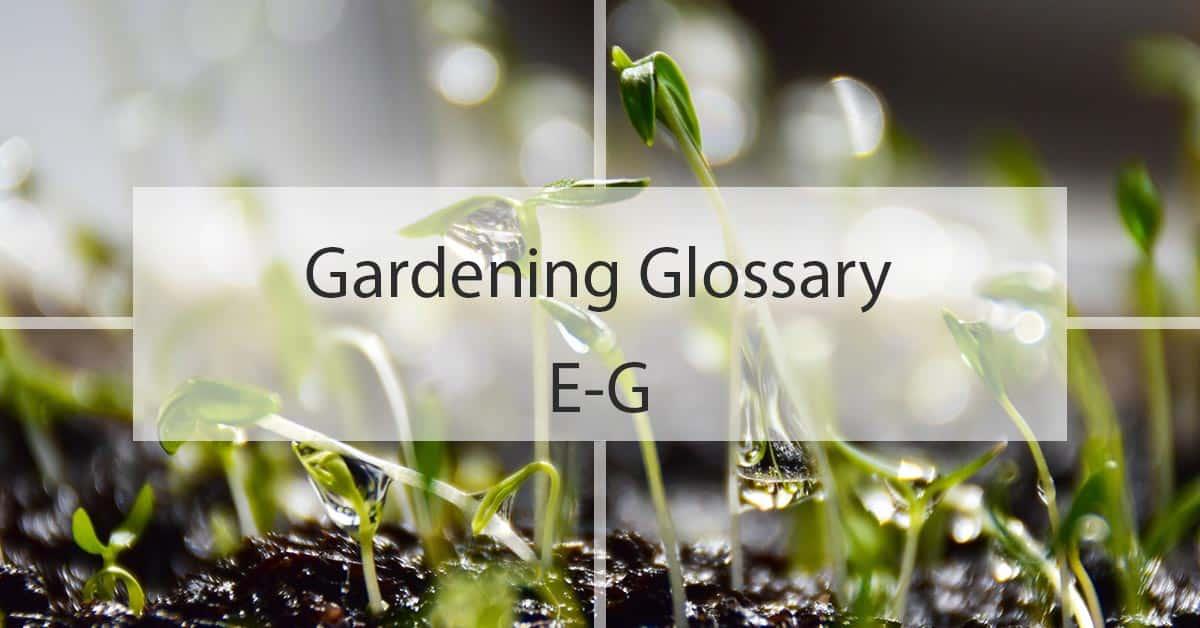Gardening Glossary E-G