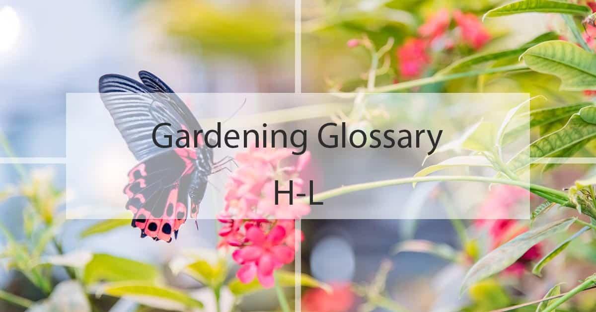 Gardening Glossary H-L