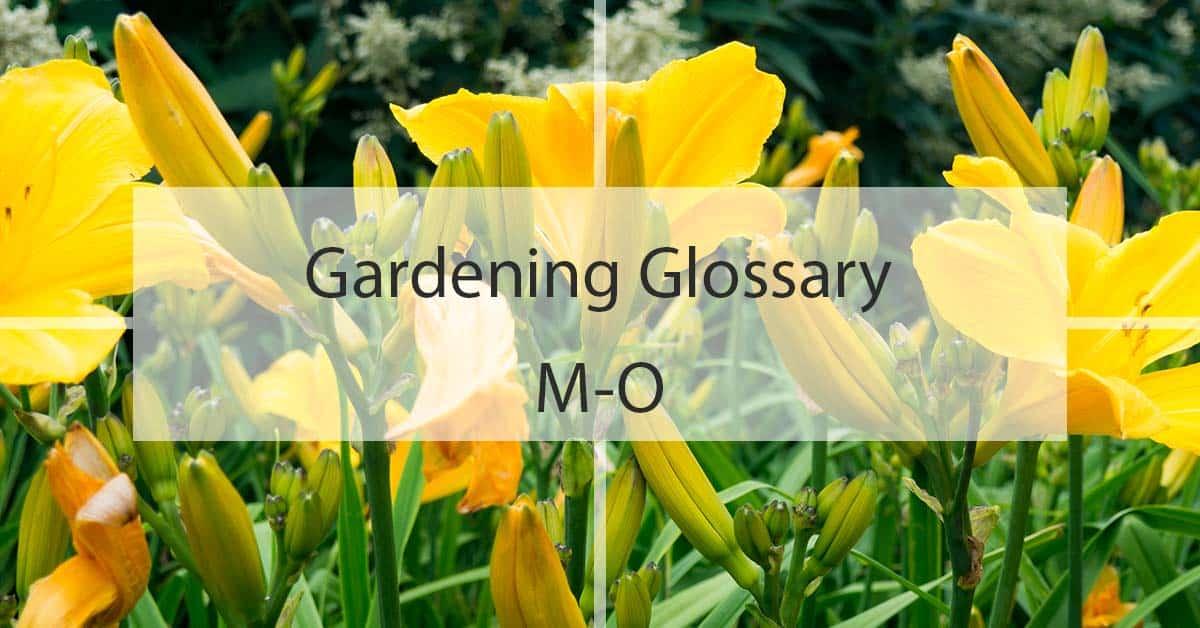Gardening Glossary M-O
