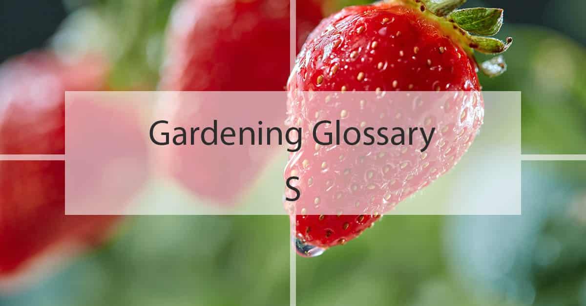 Gardening Glossary S