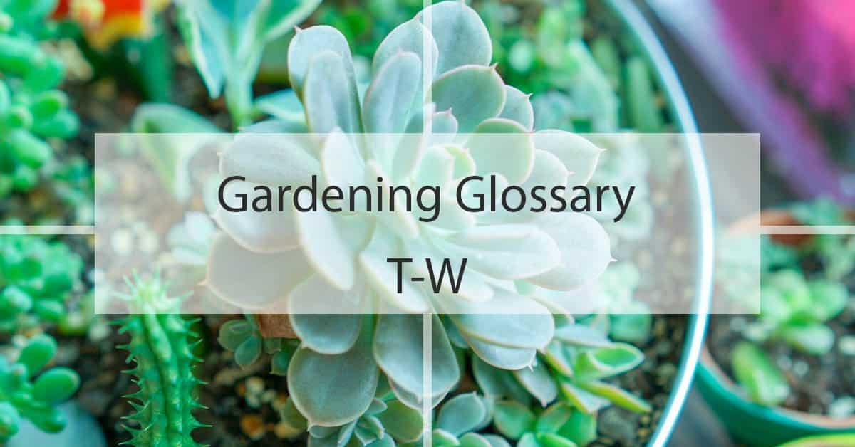 Gardening Glossary T-W