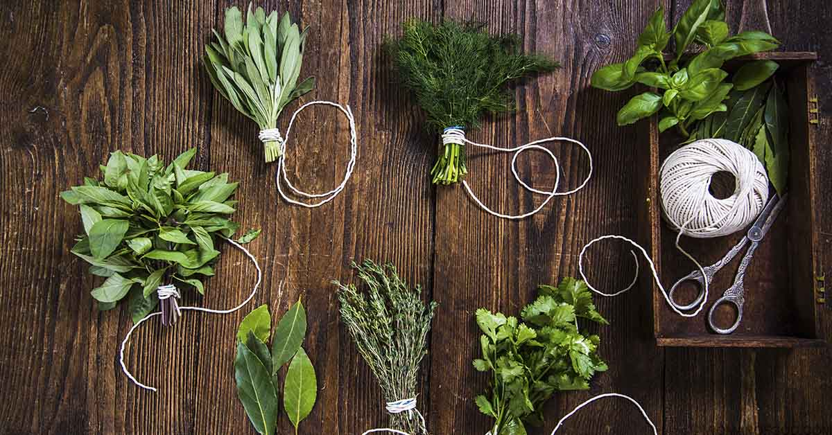 list of herbs for gardening