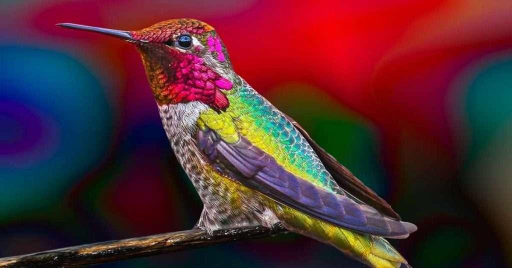 Plants To Attract Hummingbirds