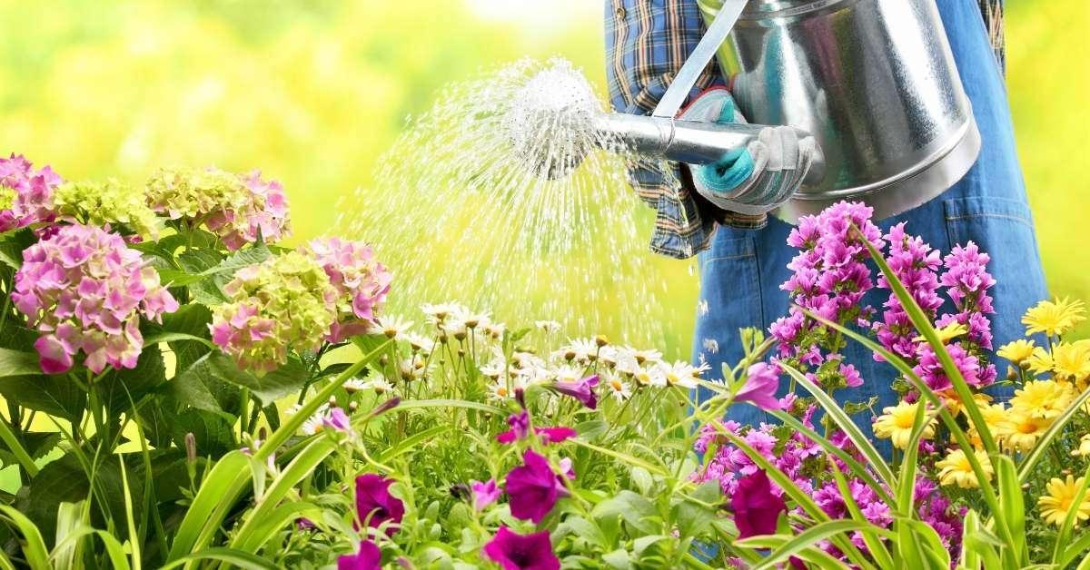 6 Best Watering Cans For Indoor and Outdoor Gardening