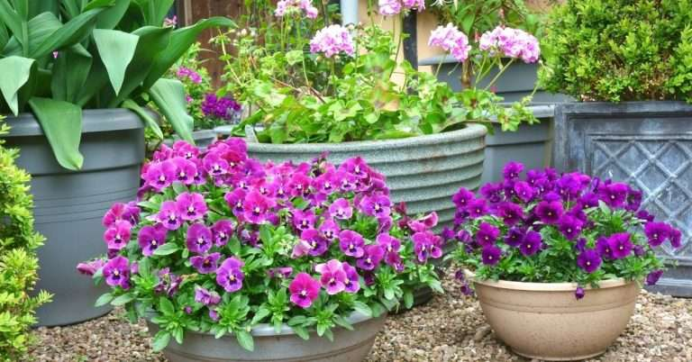Easy Tricks to Keeping Beautiful Container Plants